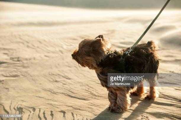 dog - cão stock pictures, royalty-free photos & images