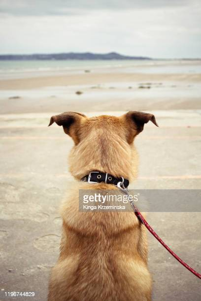 dog - rear view stock pictures, royalty-free photos & images