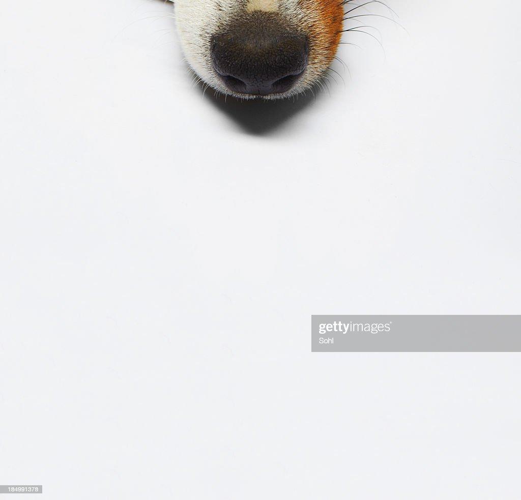 Dog : Stock Photo