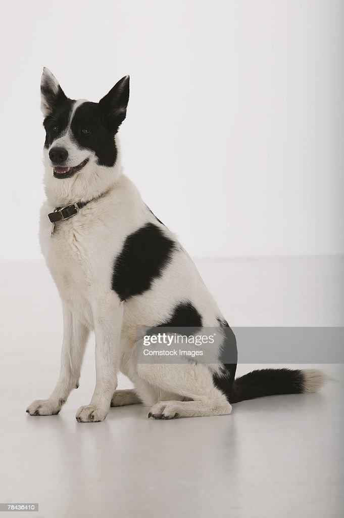Dog : Stockfoto