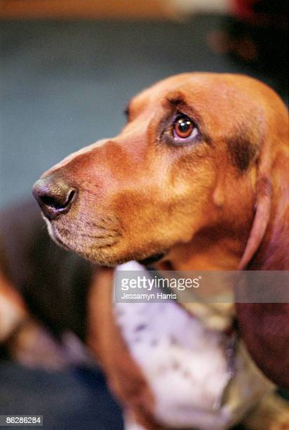 dog - jessamyn harris stock pictures, royalty-free photos & images