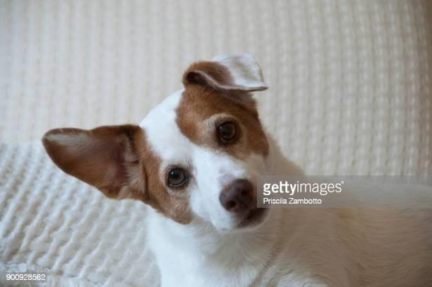 dog - einzelnes tier stock-fotos und bilder