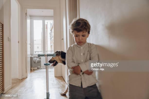 perro jugando en el apartamento - penalty fotografías e imágenes de stock