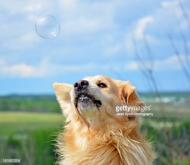 Dog playing bubbles