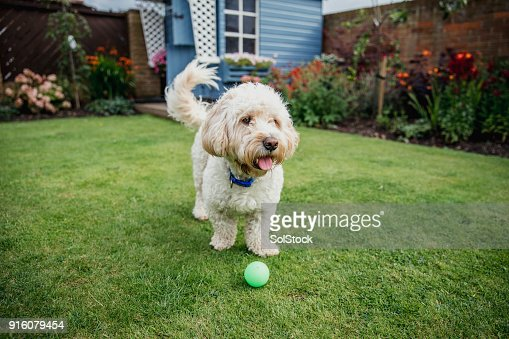 Dog Playing in the Garden