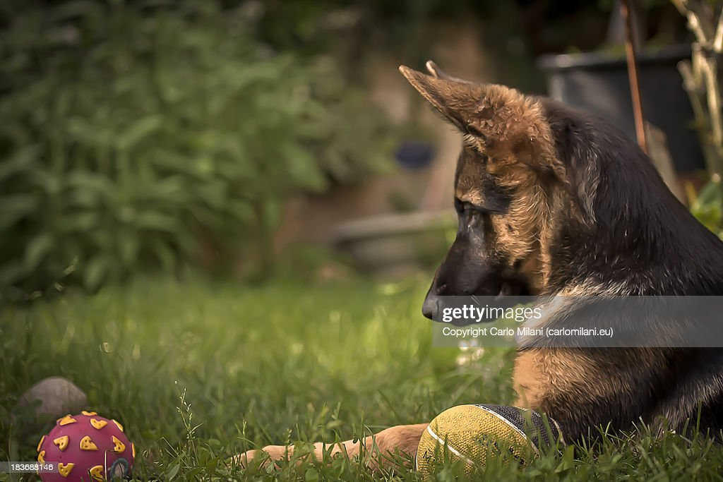Dog playing with ball and sitting in grass : Stock Photo
