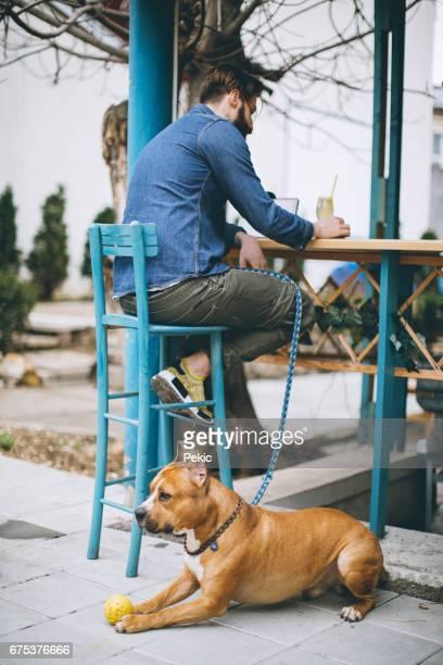 hond met bal in café spelen - one animal stockfoto's en -beelden
