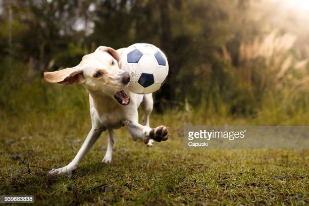 Dog playing with soccer ball