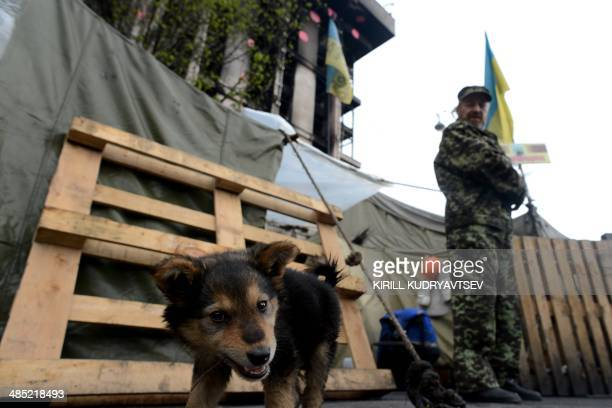 A dog plays at the ProEuropean Union demonstratorS camp at the 'Maidan' Independence Square in Kiev on April 17 2014 Russia and Ukraine sat down...