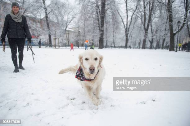 A dog plays in snow during winter in Krakow