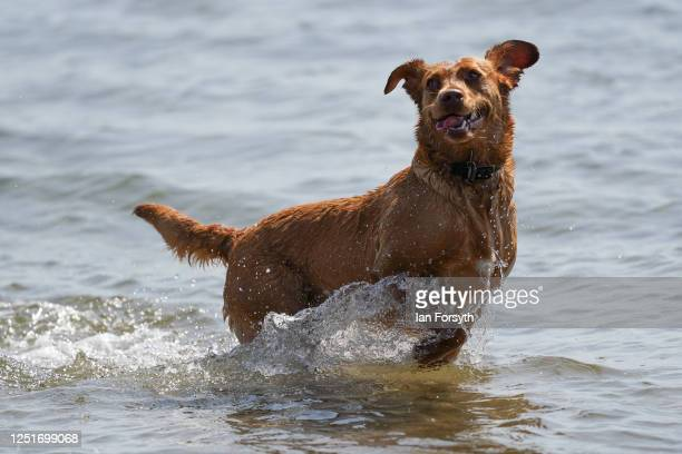 Dog plays in the sea with its owner at South Gare near Redcar as people enjoy the hot weather on June 24, 2020 in Redcar, United Kingdom. A summer...