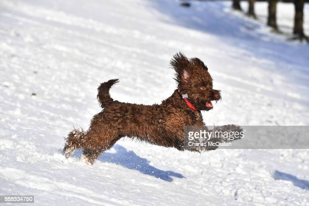 A dog plays in the snow on the slopes of Stormont on December 8 2017 in Belfast Northern Ireland The MET Office has issued a weather warning across...