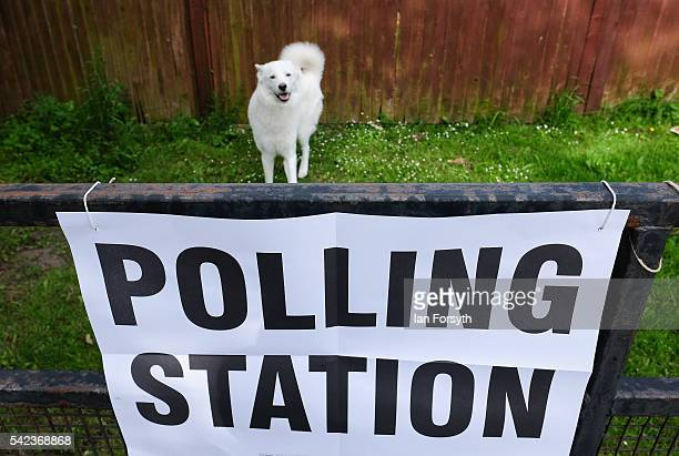 A dog plays on the grass next to a polling station sign attached to railings in Redcar as voters head to the polls to cast their vote on the EU...