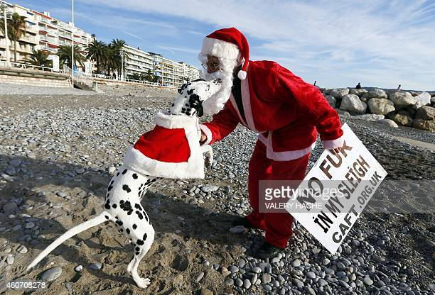 A dog plays with a member of the French antifur group 'CAFT' dressed up as Santa Claus during a demonstration on December 20 on the beach in Nice...