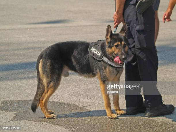 dog police - police dog stock pictures, royalty-free photos & images