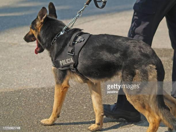 dog police - 機動隊 ストックフォトと画像