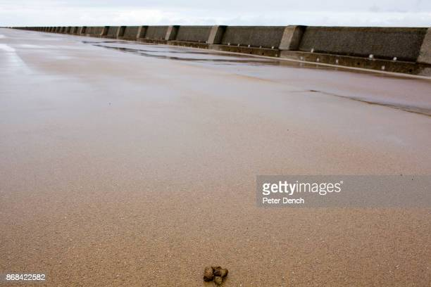 A dog poo on a wet and deserted King's Parade in New Brighton In 1986 world famous photographer Martin Parr published his book 'The Last Resort' a...