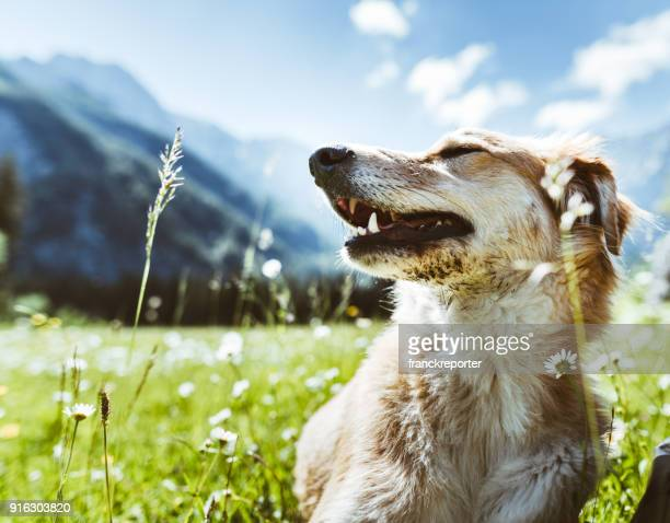 dog portrait at mountain - hunting dog stock pictures, royalty-free photos & images
