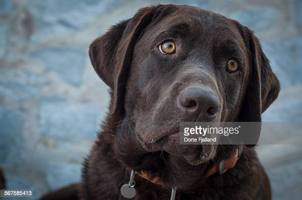 dog portrait - dorte fjalland stock pictures, royalty-free photos & images