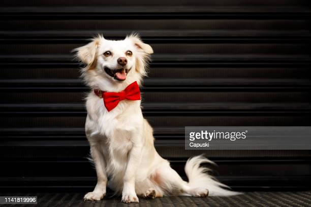 dog portrait with roller shutter door in background - animal costume stock pictures, royalty-free photos & images