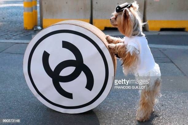 A dog poses next to the Chanel logo before the Chanel's 20182019 Fall/Winter Haute Couture collection fashion show at the Grand Palais in Paris on...