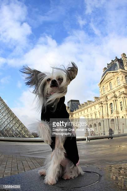 Dog posing at Louvre