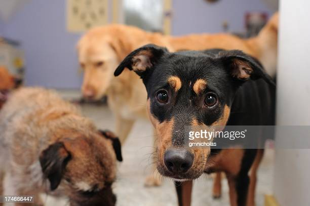 dog pound - animal shelter stock pictures, royalty-free photos & images