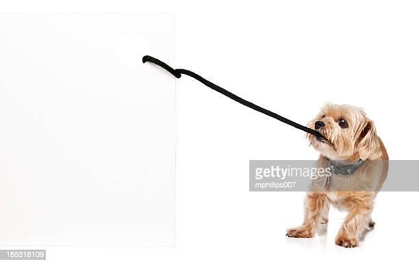 Hund ziehen