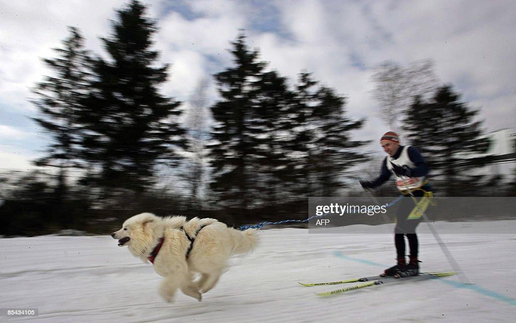 A dog pulls a Russian skier on March 14, 2009 during a competition outside Moscow.