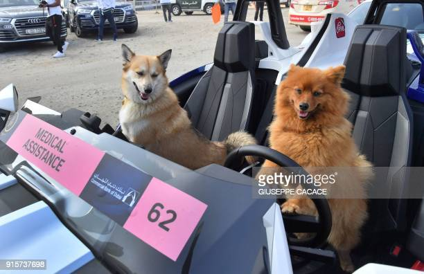 A dog puts its paws on the steering wheel of an ambulance vehicle as another one sits next to it prior to the start of the third stage of the Dubai...