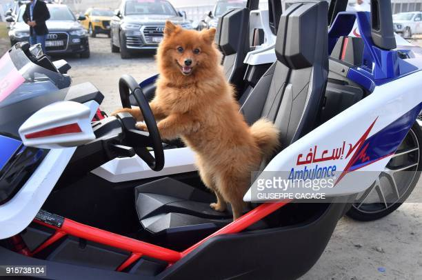 A dog puts its paws on the steering wheel of an ambulance vehicle prior to the start of the third stage of the Dubai Tour from Sky Dive Dubai to...