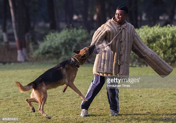 Dog Rani getting trained to attack at NTCD Tekanpur on December 15 2016 near Gwalior India At the National Training Centre for Dogs in Tekanpur MP...