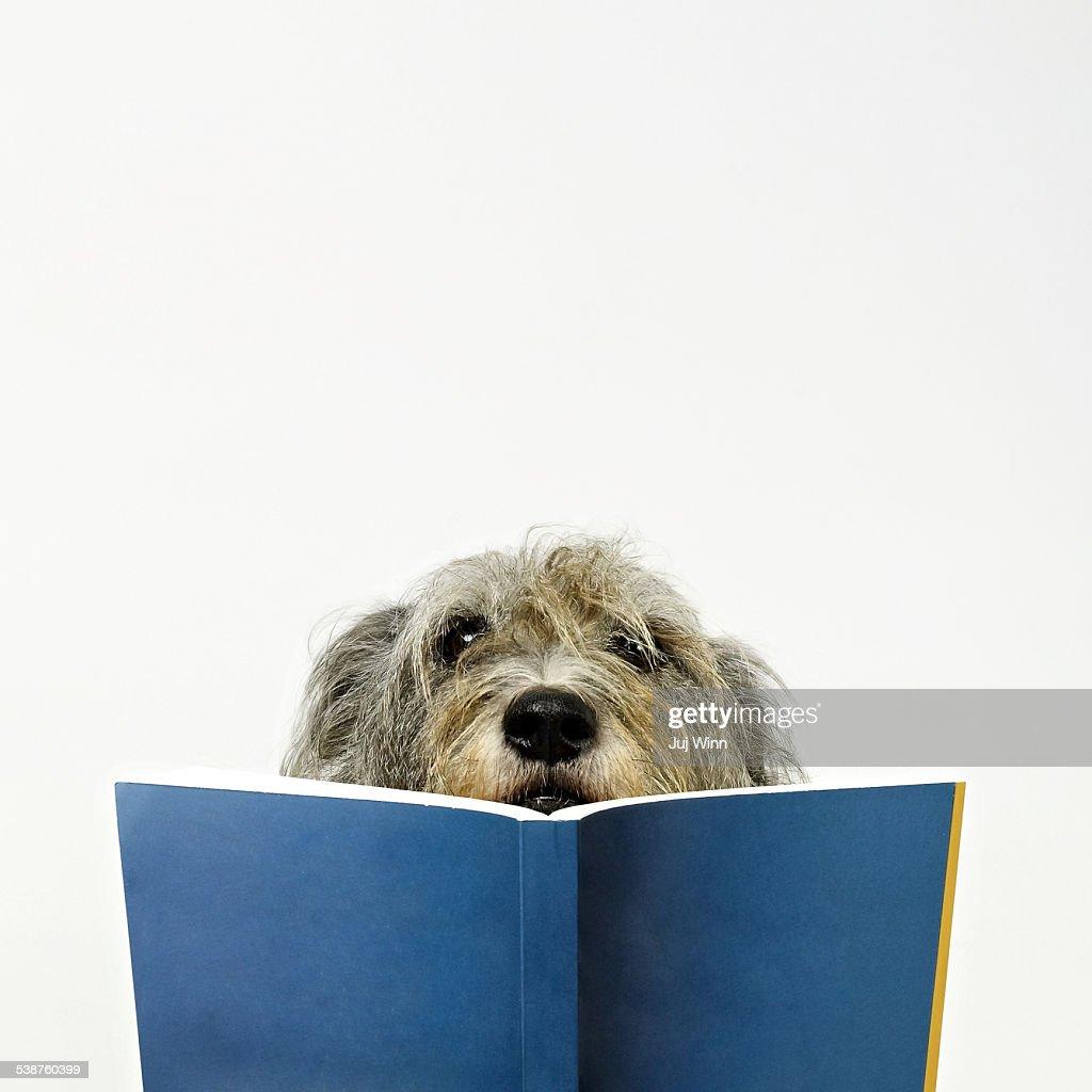 Dog Reading Book : Stock Photo