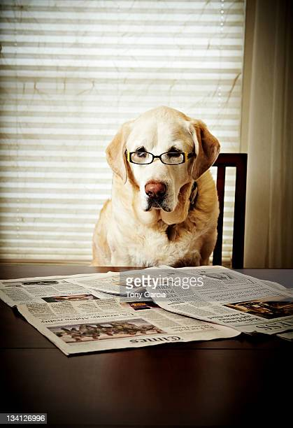 dog reading the newspaper and wearing glasses - anthropomorphic ストックフォトと画像