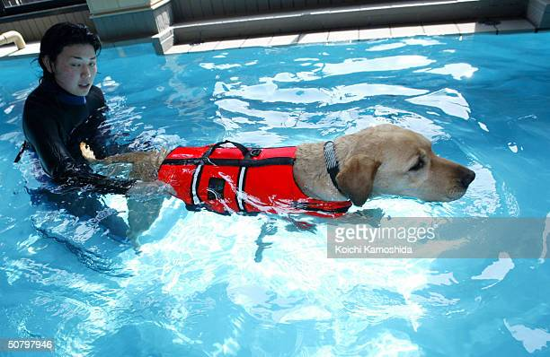 A dog receives swimming therapy at the Oedo Resort and Spa May 4 2004 in Tokyo Japan Japan is on a long holiday and some pet owners leave their...