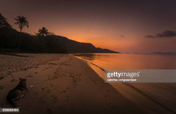 dog relaxing at beach against sky during sunset - sunset beach stock photos and pictures
