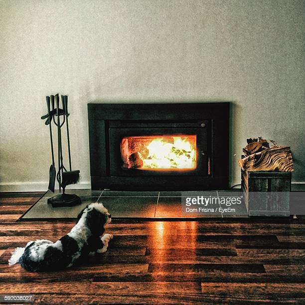 Dog Resting By Lit Fire Place At Home