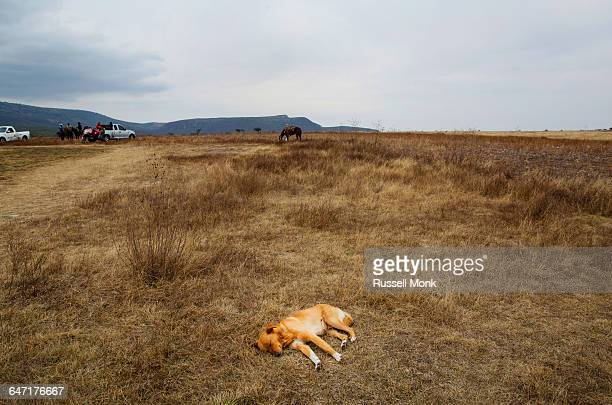 A dog resting in a field