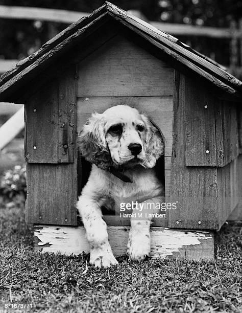 dog resting in doghouse - mamífero con garras fotografías e imágenes de stock