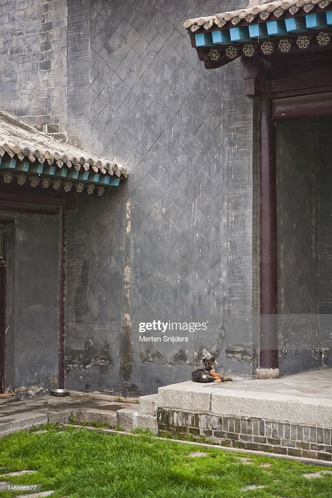 Dog resting in temple courtyard. : Stockfoto