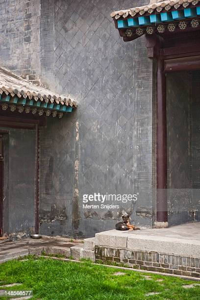 dog resting in temple courtyard. - merten snijders stock pictures, royalty-free photos & images