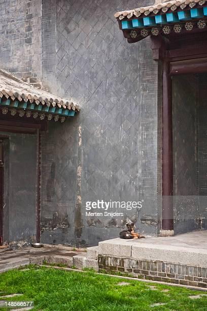 dog resting in temple courtyard. - merten snijders stock-fotos und bilder
