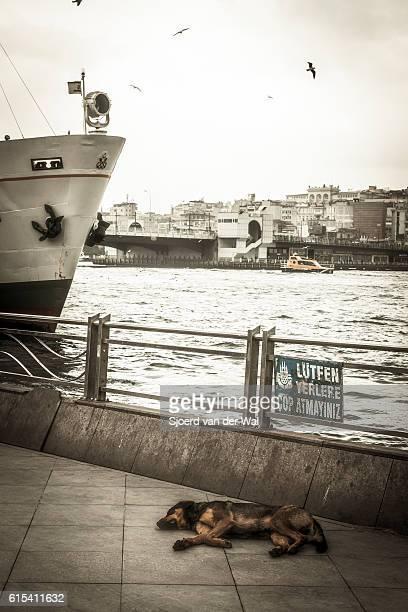 "dog resting next to ferry over the bosphorus in istanbul. - ""sjoerd van der wal"" ストックフォトと画像"