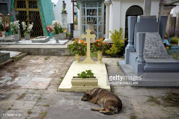 Dog rests next to a grave ahead of the Day of the Dead celebration at the Municipal Cemetery in San Cristobal de las Casas, Chiapas state, Mexico on...