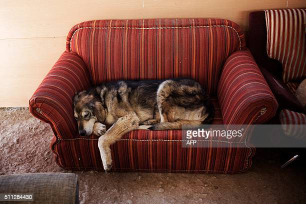 A dog rests on a couch at Vafa animal shelter on February 19 2016 in the town of Hashtgerd some 70kms west of the capital Tehran Vafa the first...