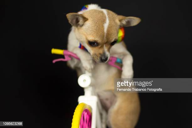 Dog riding a colorful bicycle