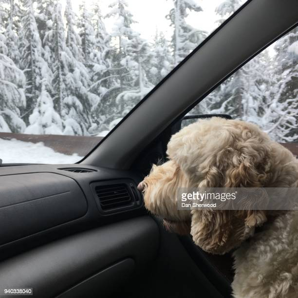 dog riding shotgun in a car - dan sherwood photography stock pictures, royalty-free photos & images