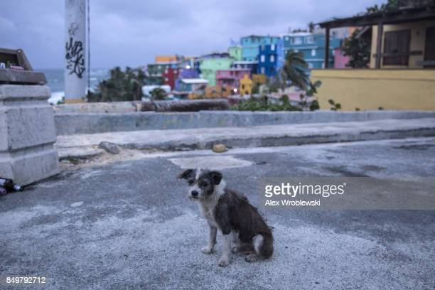 A dog roams the streets of the La Perla neighborhood in Old San Juan as residents prepare for a direct hit from Hurricane Maria on September 19 2017...
