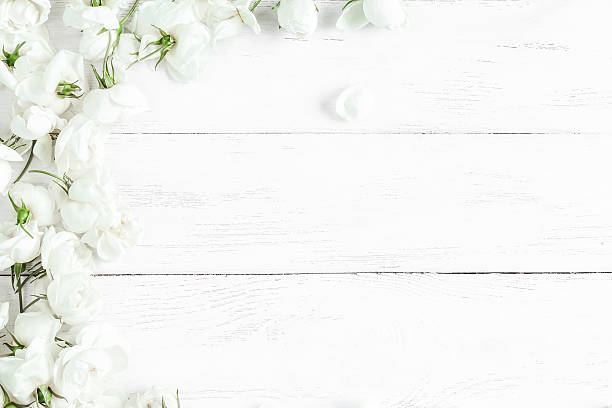 Free white flower images pictures and royalty free stock photos dog rose flowers on white wooden background frame mightylinksfo