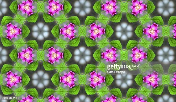 Dog Rose kaleidoscope pattern.